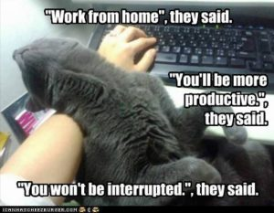 Meme Don T Stress Funny : 83 best work from home memes